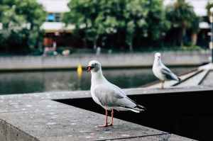 Birds at a canal