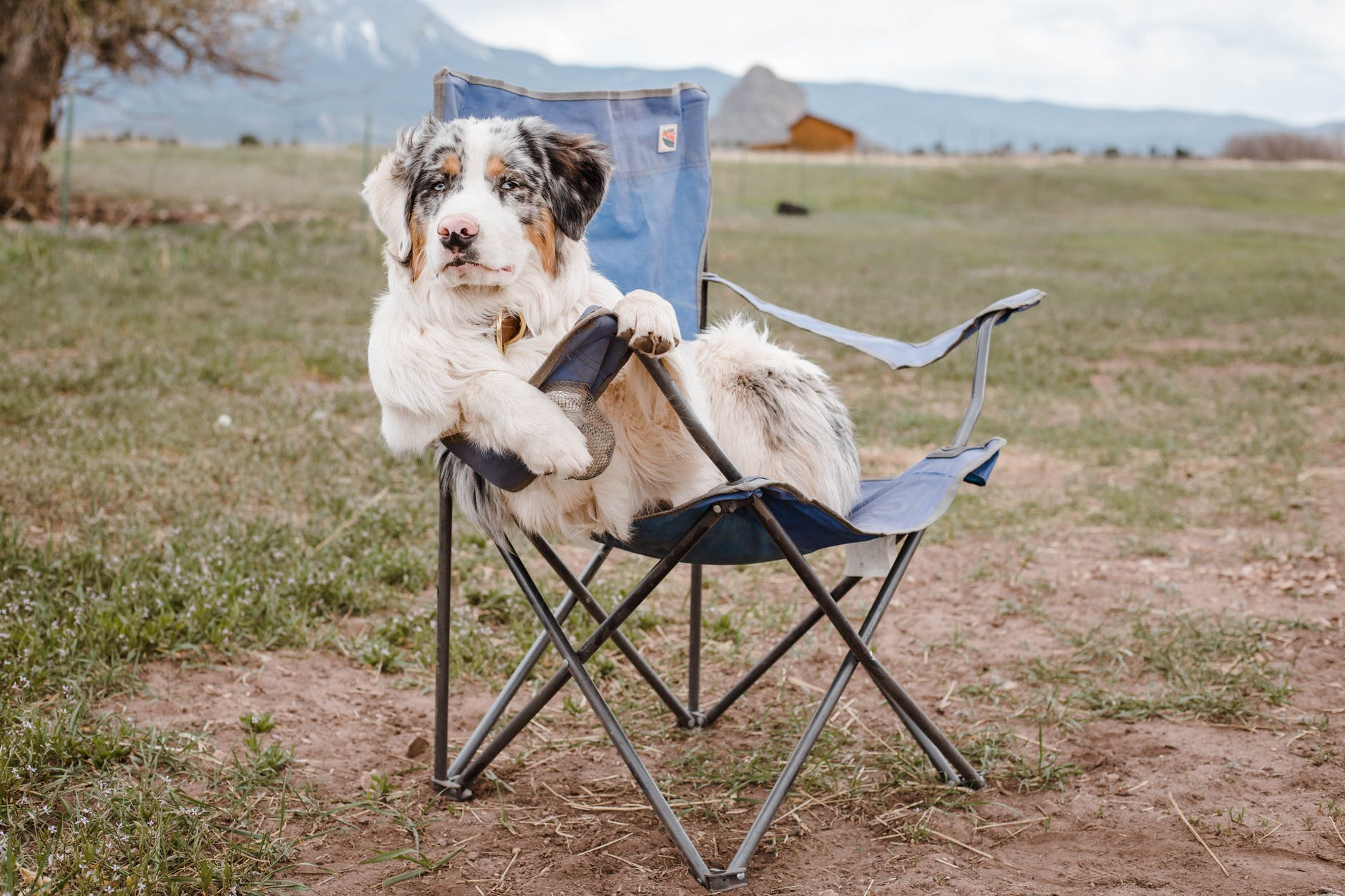 Dog relaxing on camp chair